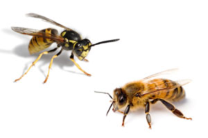 our stinging insect removal services prevent their occurrence on your property