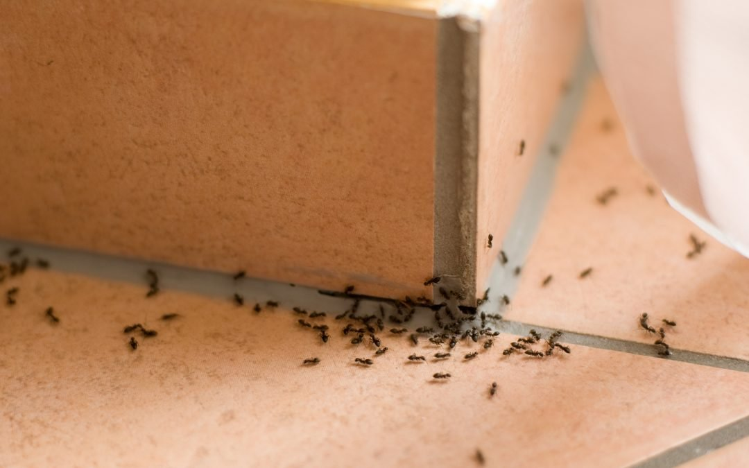 Once the ants come marching in, professional treatment may be your only recourse