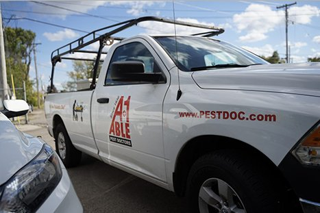a bed bug, one of our pest control services